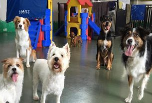 """The first """"dog hostel"""" opened in Jalandhar"""