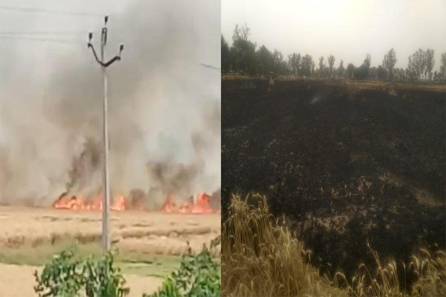 13 acres of wheat crop burnt